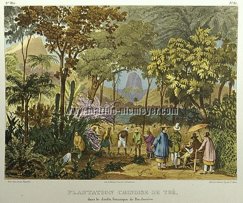 Johann Moritz Rugendas, Plantation Chinoise de Thè